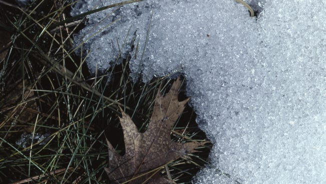 Close-up of melting snow on grass