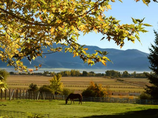 Fall colors are starting to show along Old Franktown Road where a horse grazes on a cool autum morning on Oct. 8, 2014.