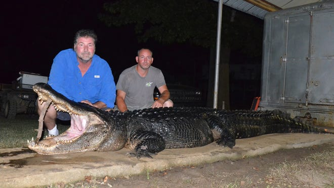 Kennie Crechale (left) of Morton and Ronnie Clifton of Petal broke both the longest and heaviest Mississippi male alligator records on Saturday.