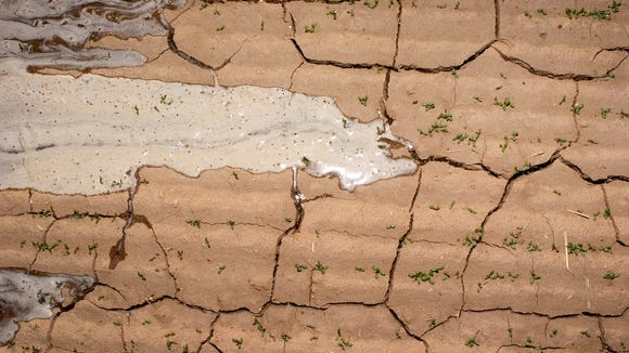 A parched alfalfa field in Arizona.