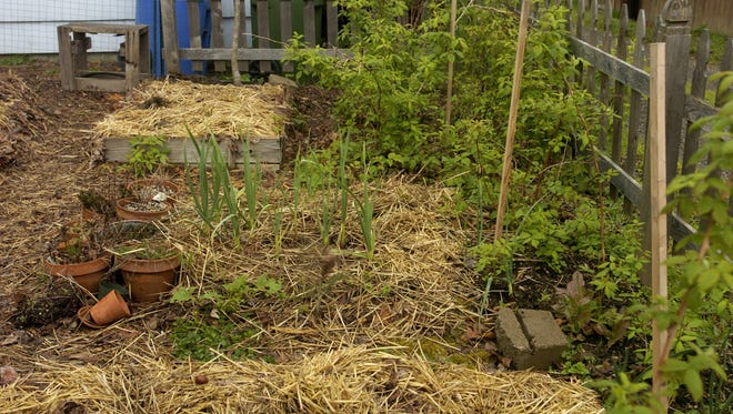 Several of the earth friendly gardening methods are inexpensive such as this straw mulch, which can be picked up for a couple of dollars a bale to suppress weeds.