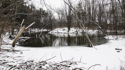 An area along the banks of the Red Cedar River in Meridian Township east of E. Shaw Lane, just beyond the MSU Community Music School, where a proposed bridge and trails are being discussed by Ingham County and Meridian Township officials.