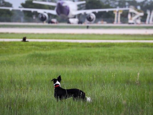 airportdog001