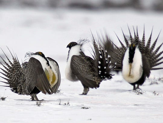 Sage grouse habitat has been a contentious point for years.