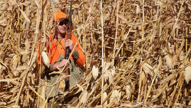 Tyge Blomberg steps out of a patch of corn while pheasant hunting with family on their farm near Salem, Saturday, Oct 17, 2015.
