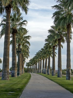 A tree trimmer was stuck in a palm tree Wednesday afternoon.