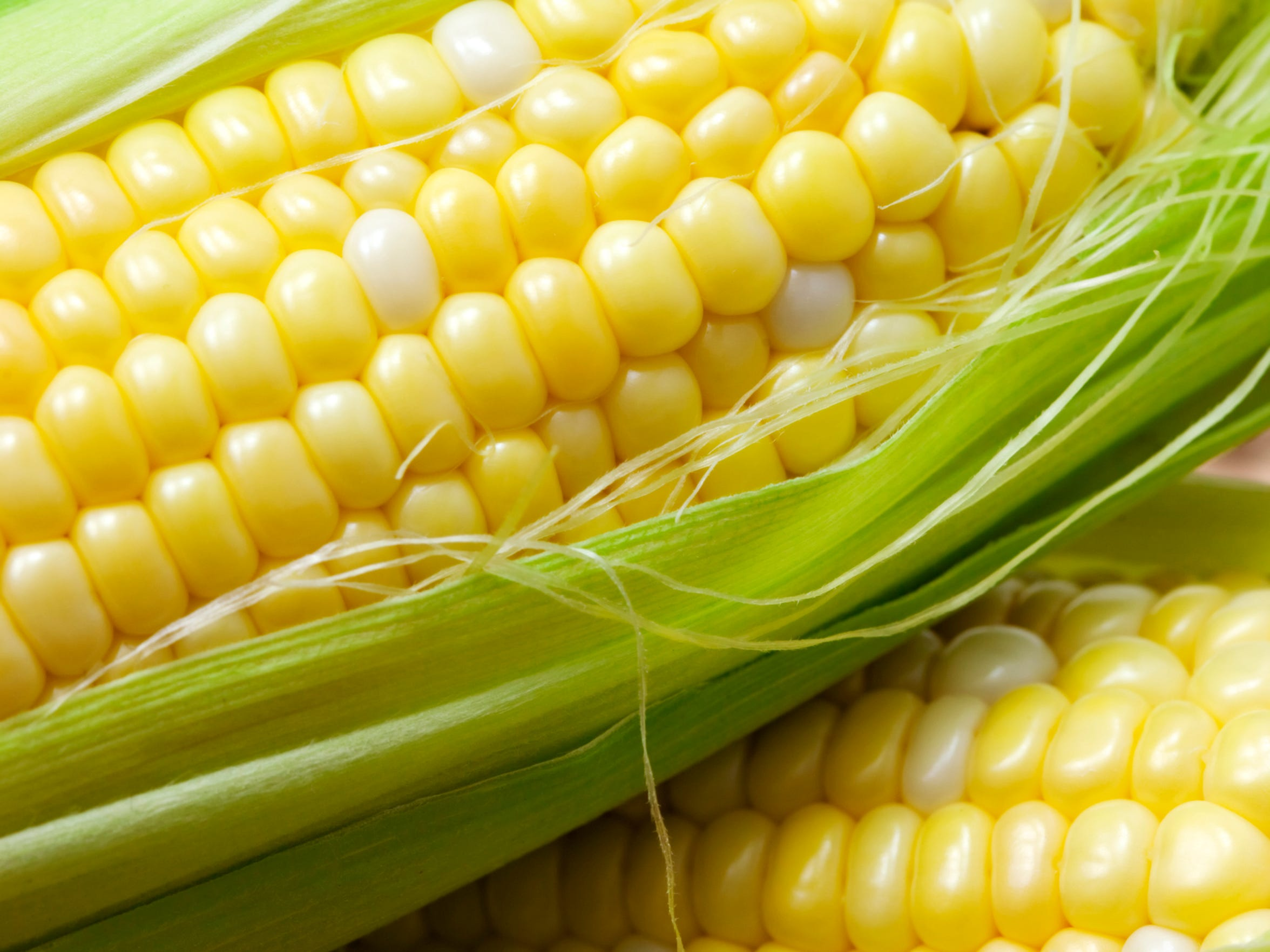 One ear of corn has approximately 800 kernels in 16