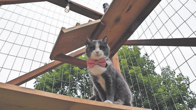 A catio provides safe outdoor time where cats can enjoy fresh air and healthy exercise, bird watching and sunbathing.