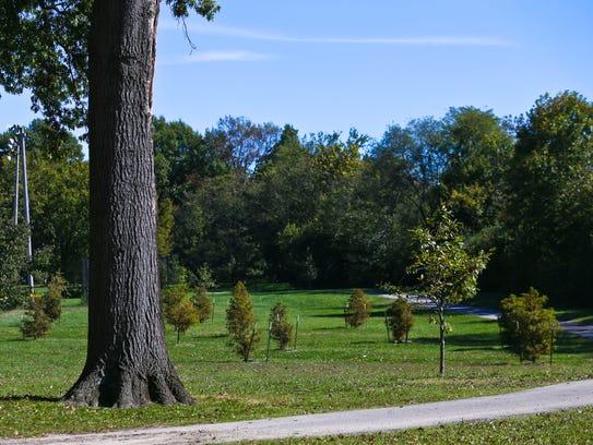 Wyandotte Park in Louisville has seen some trees being