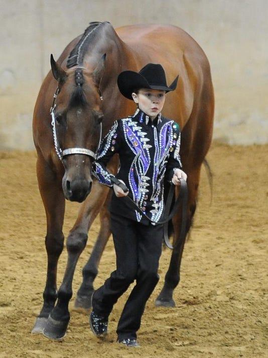 TCL quarter horse 04.jpg
