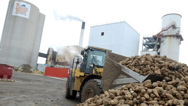 A front-end loader picks up a bucket of beets at the Croswell Michigan Sugar Co. processing plant, in Port Huron, in 2014. The beets are brought into the factory to be chopped up and processed into sugar.