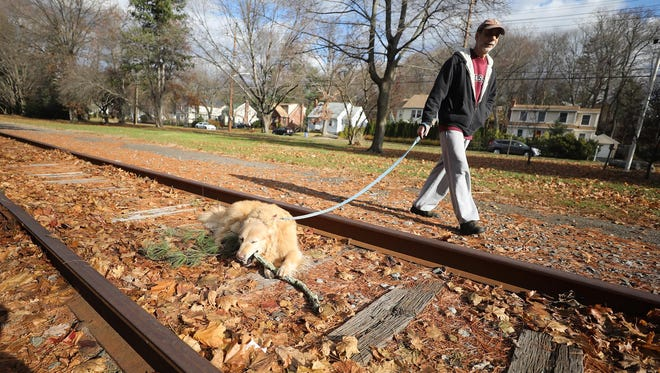 Tenafly resident Stuart Meistrich on a walk with Sparkle as the dog takes a break to gnaw a stick on the abandoned train tracks in town.