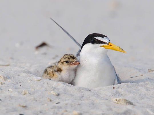 2 - shorebirds