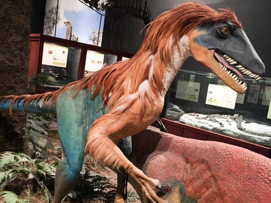 The vicious hunter Deinonychus Antirrhopus draws blood at the Museum of the Rockies in Bozeman.