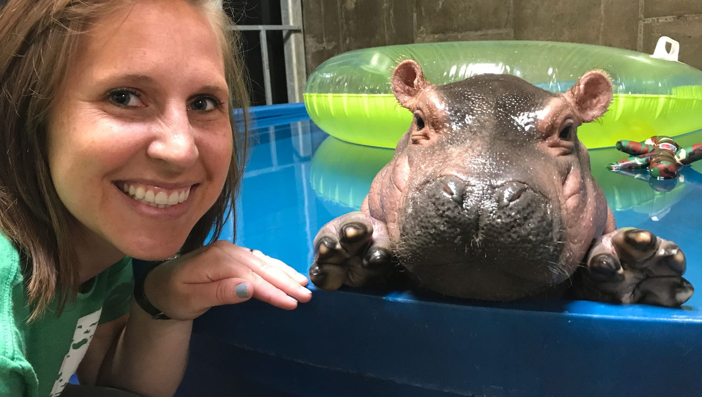 What It S Like To Take Care Of A Baby Hippo