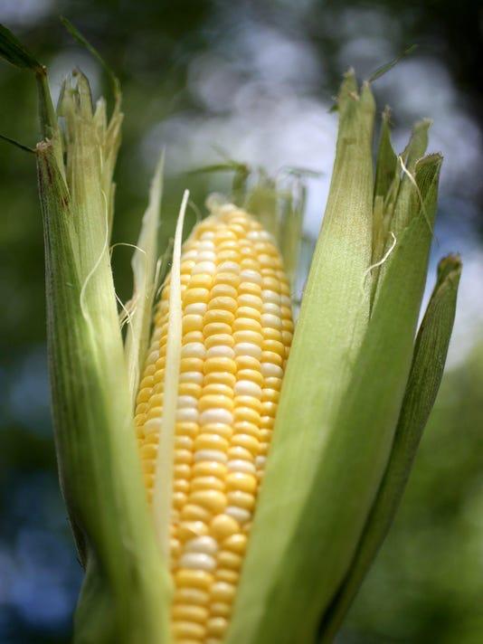 DFP Sweet Corn Seaso (7)