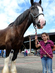 Lily McInnis, 10, of Aloha, Ore., handles Windsor, a clydesdale, during a livestock parade at the Oregon State Fair in Salem on Saturday, Aug. 29, 2015.