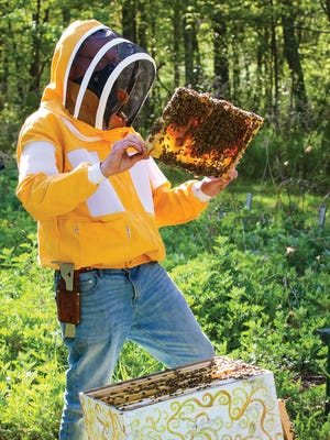 Newport resident and bee expert and mentor Ed Karle examines one of Susan Medyn's hives.