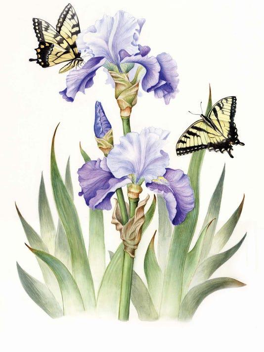 Iris and Swallowtail.jpg
