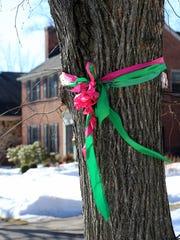 Ribbons around trees in Jennifer Stalker's neighborhood