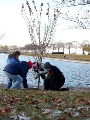 At least 130 volunteers plant 122 flowering cherry trees on Belle Isle near the James Scott Memorial Fountain in November.