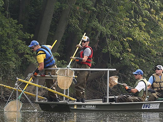 Drew Holloway, fisheries biologist with the Muncie Sanitary District's Bureau of Water Quality, and three Ball State interns have spent the summer electrofishing throughout waterways in Delaware County. The process uses electric current to let them take samples of fish from selected sites to determine the number and health of the fish in the county. Once the fish are identified, measured and weighed, they are released back into the water.