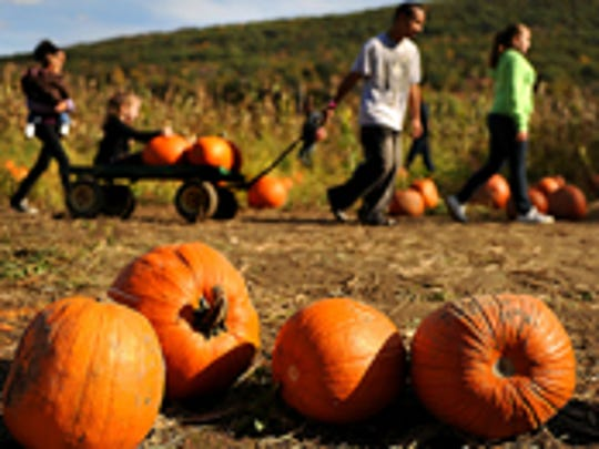 Heaven Hill Farm in Vernon offers hay rides, pig races, a corn maze, educational exhibits and pumpkin picking.