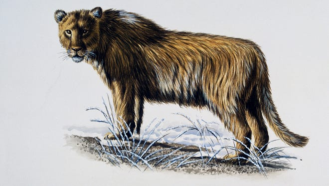 An artist's depiction of a European or Eurasian cave lion.