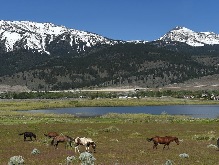 Wild horses are seen near Little Washoe Lake south