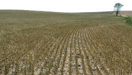 South Dakota crop prices mostly increased in May.