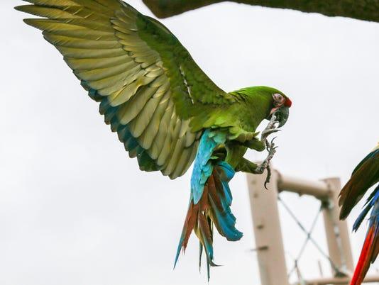 636294275738376145-013-MP-bird.JPG