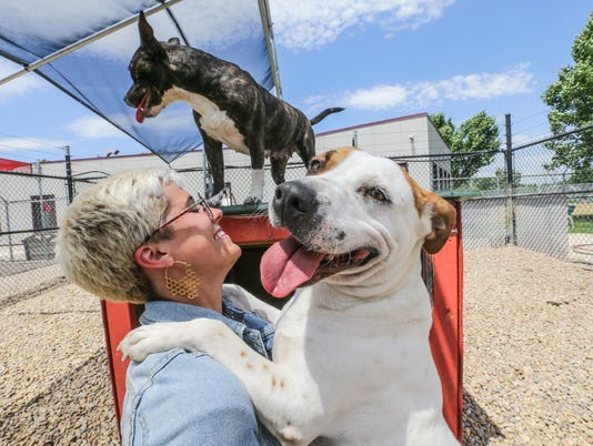 Tinder Tails, pets from Indianapolis Animal Care and Control up for adoption.