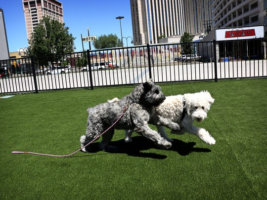 Coco, left, and Peanut play together following the ribbon cutting ceremony at the newly opened Biggest Little City Dog Park in downtown Reno on July 10, 2018.
