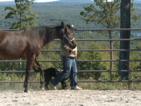Farms want to provide more horse therapy to veterans