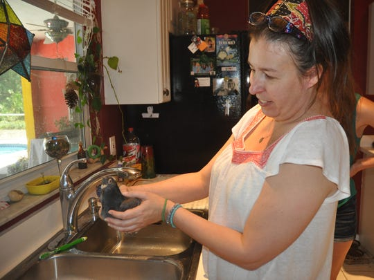 Bonita Springs' resident Tiffany Liles prepares to give Pidge another bath.