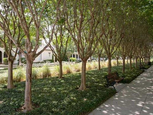 636257973886873290-trees.jpg