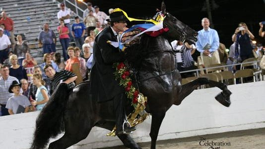 I Am Jose, World Grand Champion 2013 of the Tennessee Walking Horse National Celebration.