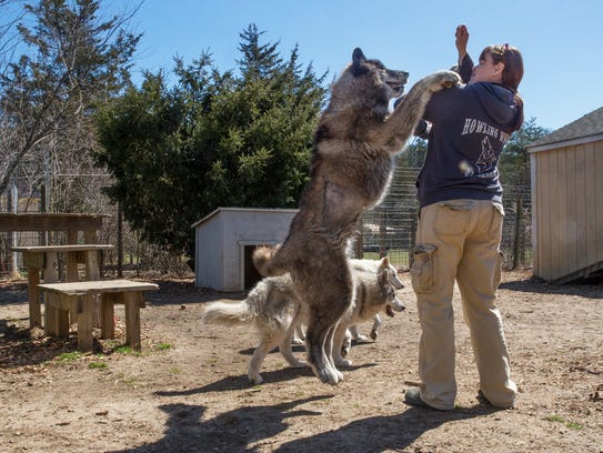 Wolfhound Tours