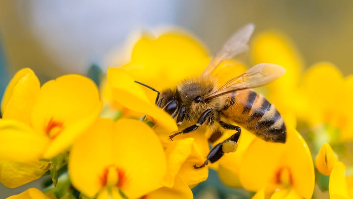 People can do small things at home to help honeybees.