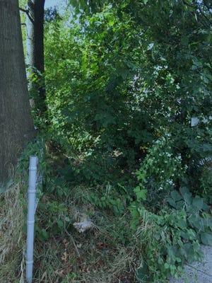 An unkempt walkway near Cove Road and Centre Street in Pennsauken.