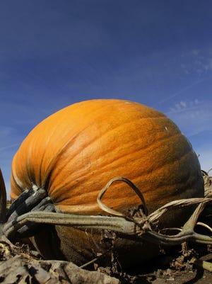 Franklin will host PumpkinFest on Oct. 22.