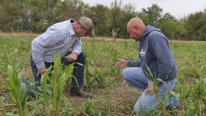 Shannon Gnad, left, looks at Darrin Unruh's cover crops on Unruh's farm on Oct. 20 in Haven.