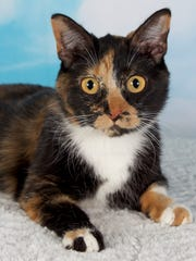 Mosaic is available for adoption at 952 W. Melody Ave. in Gilbert.