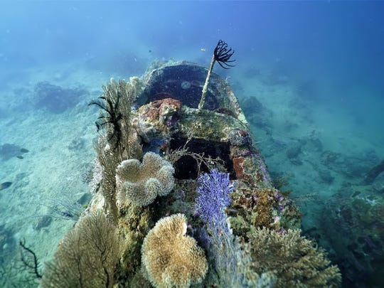 A B-25 bomber recently surveyed by Project Recover is covered with sea life off the coast of Papua New Guinea.