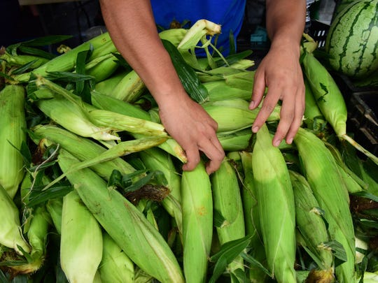 An employee at Alstede Farms arranges the white corn