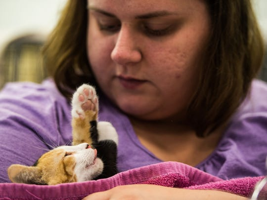 Krista Gerhards cares for a kitten in the post-op area after it was spayed or neutered during a trap-neuter-return clinic at Steelton Community Cats on Wednesday, July 27, 2017.