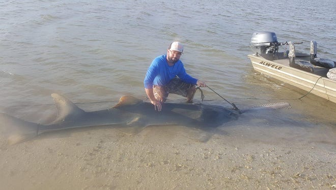 A Naples man catches a near 17-foot sawfish in Chokoloskee, Florida, freeing the fish from an abandoned rope.
