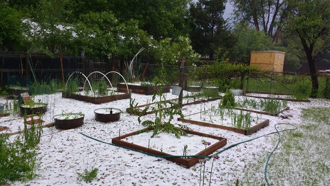 A garden in Fort Collins gets covered in hail during a storm Tuesday May 22, 2018.