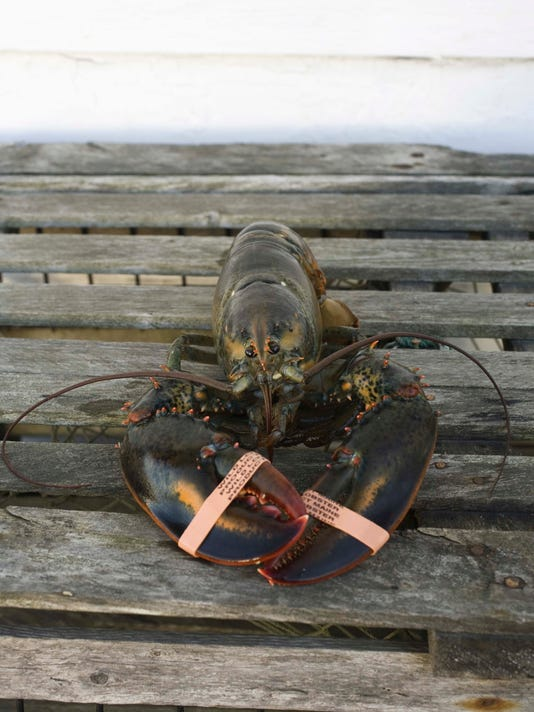 Raw lobster on wooden trap