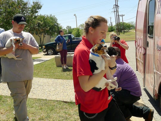 Workers at Abilene's Animal Shelter carry out dogs to a waiting MuttNation bus in this file photo from three years ago. The dogs were taken to Oklahoma then to an adoption event in Nashville.